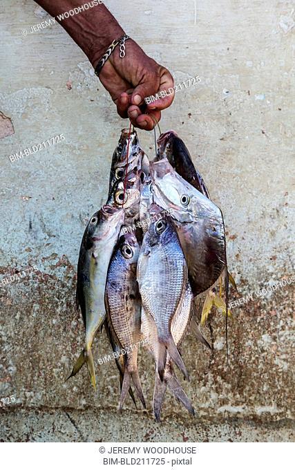 Fisherman holding bunch of fish