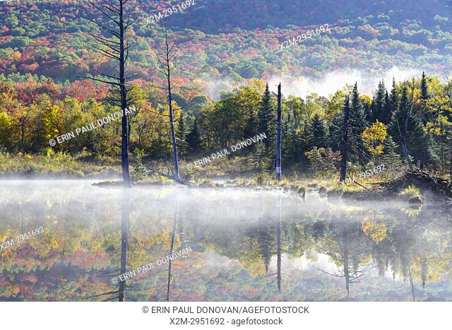 Wildlife Pond in Bethlehem, New Hampshire USA on a foggy autumn morning
