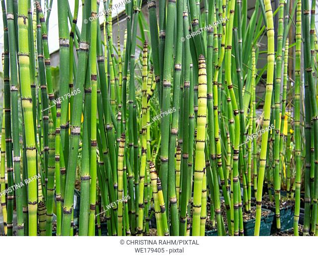 Fresh green bamboo grass organic Asian style background texture