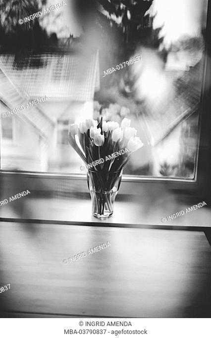 Bouquet of tulips in white at wintry window