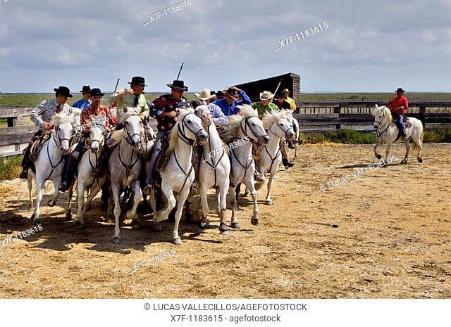 Gardians doing an Abrivado Gardians horsemen that works with bull of Camargue Les Saintes Maries de la Mer,Camargue, Bouches du Rhone, France