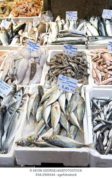 Variety of Fish for Sale on Market Stall, Bologna; Italy