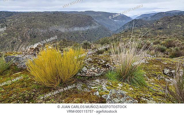 Faia Brava private reserve, Portugal, Europe