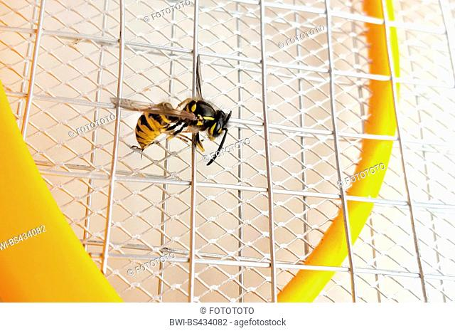 wasp was electrocuted by electric fly flap