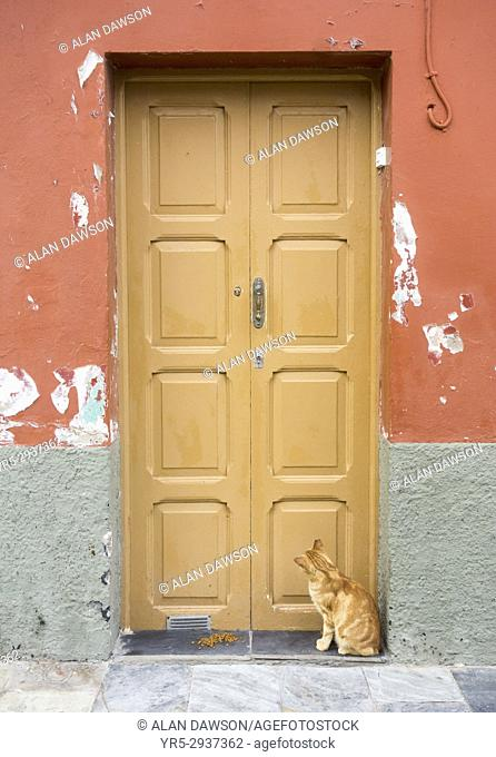 Cat outside house in Las Palmas, Gran Canaria, Canary Islands, Spain. Cat food on step