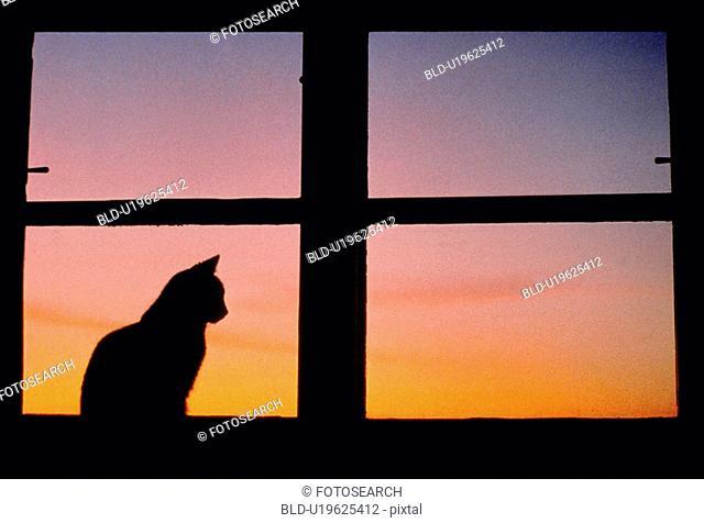 fensterstock, austria, dornbirn, cat, calf, male cat, animal