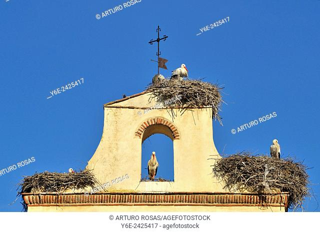 Storks in the nests over the Chapel of St. Mary in Avila, Spain