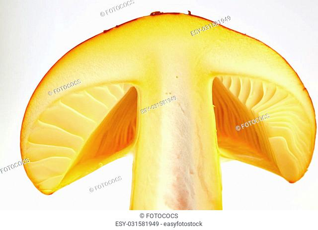 Amanita Caesarea or Caesar's Mushroom, one of the most delicious wild mushrooms, isolated on white background, cross section, extreme close up