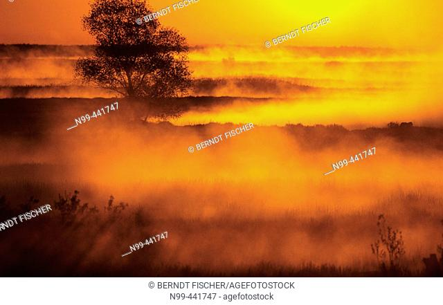 Early morning mist over the Biebrza river valley, Biebrza National Park. Poland