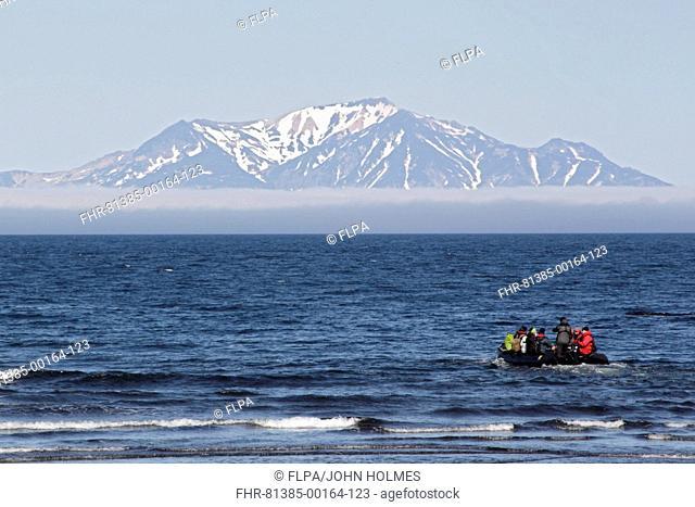 Zodiac inflatable boat with tourists at sea, Onekotan Island, Kuril Islands, Sea of Okhotsk, Sakhalin Oblast, Russian Far East, Russia, june