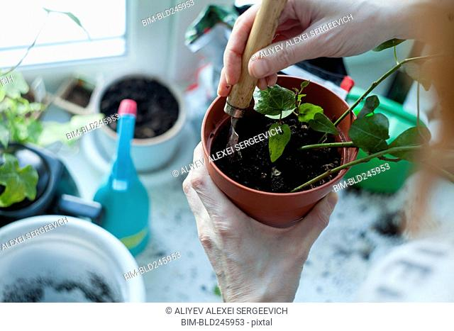 Hands of Caucasian woman mixing soil in potted plant
