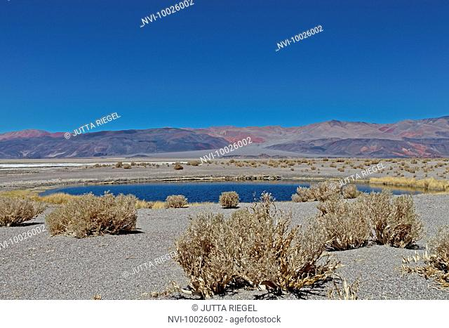 Ojos del Campo, Salar de Antofalla, Puna desert, Catamarca Province, Argentina, South America