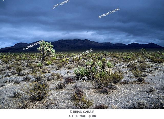 View of desert landscape and mountains against dramatic sky, Mojave Desert, Nevada, USA