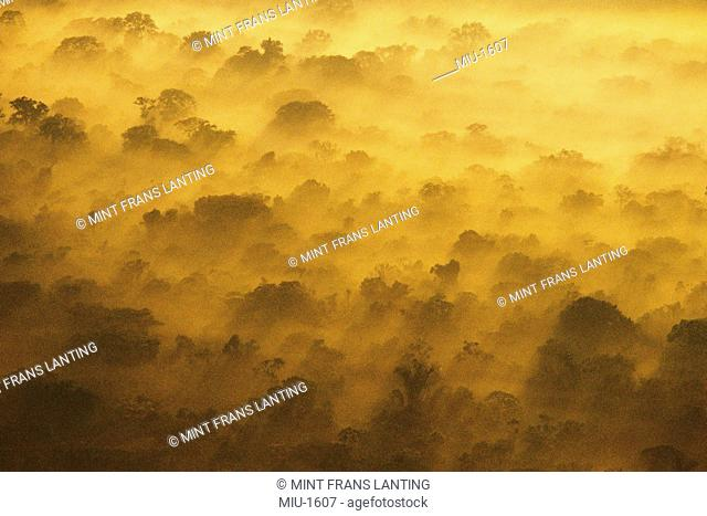 Morning clouds over lowland rainforest, an aerial view, Manu National Park, Peru