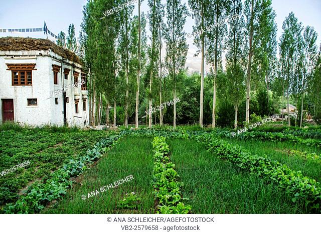 Typical mud-brick house painted in white and crowned by a line of prayer flags. A vegetable garden is a must