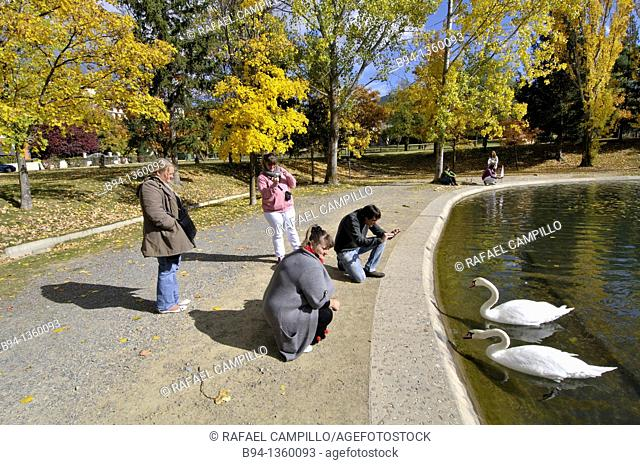 People with swans by the Osseja lake in autumn, Pyrenees-Orientales, Languedoc-Roussillon, France