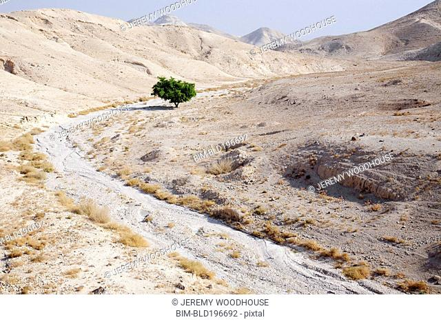 Dry riverbed and lone tree in barren area