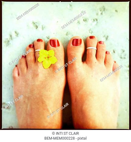 Close up of pedicured toes, toe rings and flower