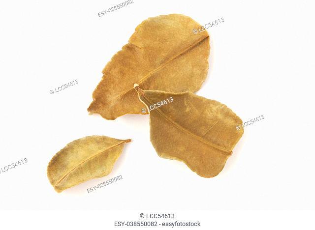 Dried lemon leaves on white background