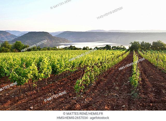 France, Herault, vineyards in the region of the Lake of Salagou