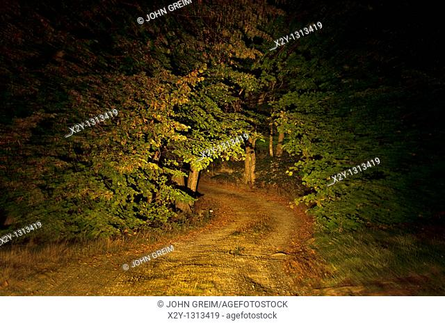 Remote unpaved country road through forest trees at night