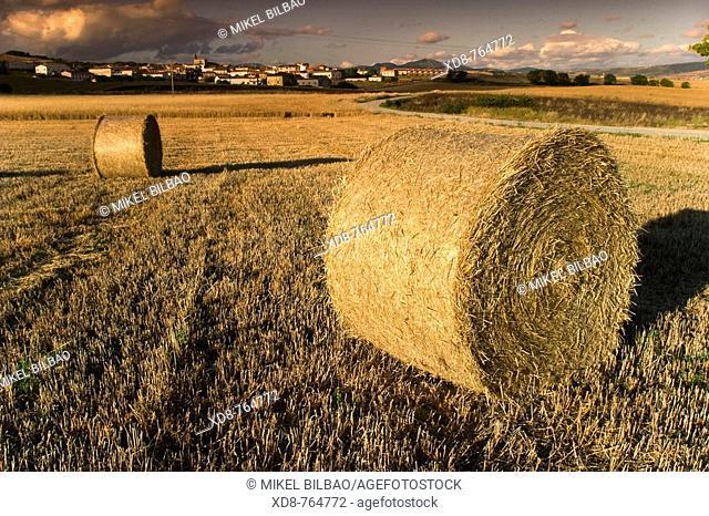 wheat field and bales  Abarzuza, Tierra Estella county, Navarra, Spain, Europe