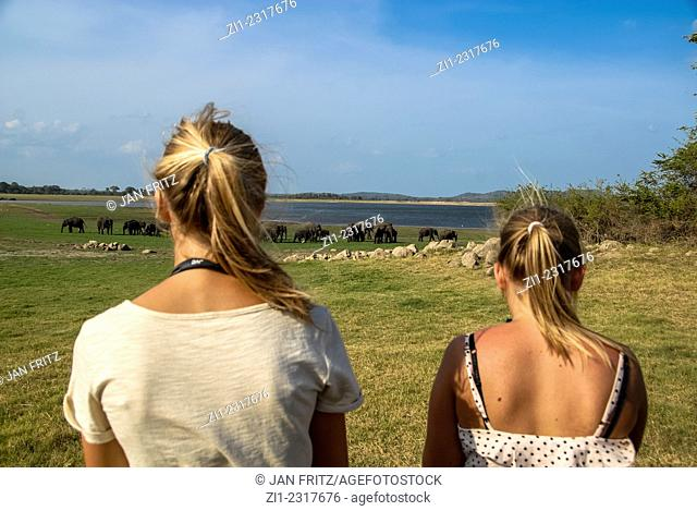 Tourists taking pictures from elephants in minneriya national park, sri lanka