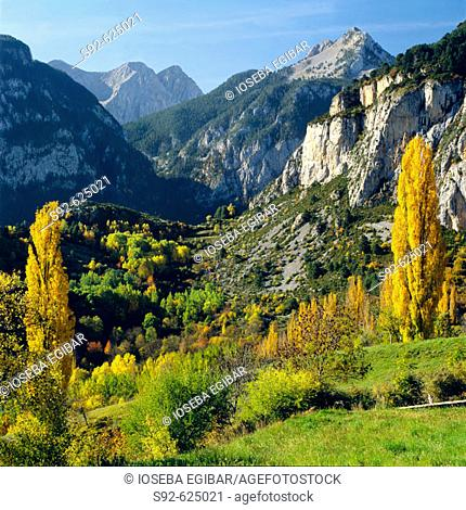 Colorido en el monte (Huesca)