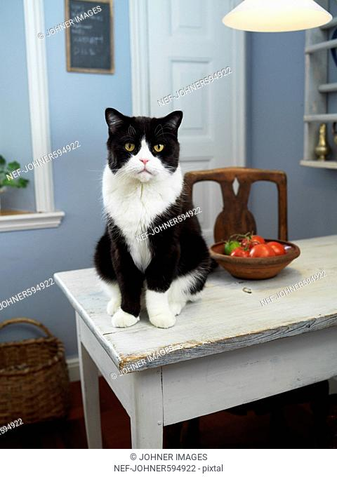 A cat sitting on a kitchen table, Skane, Malmo, Sweden