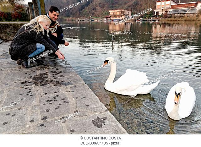Heterosexual couple crouching by swans on lake, Lombardy, Italy