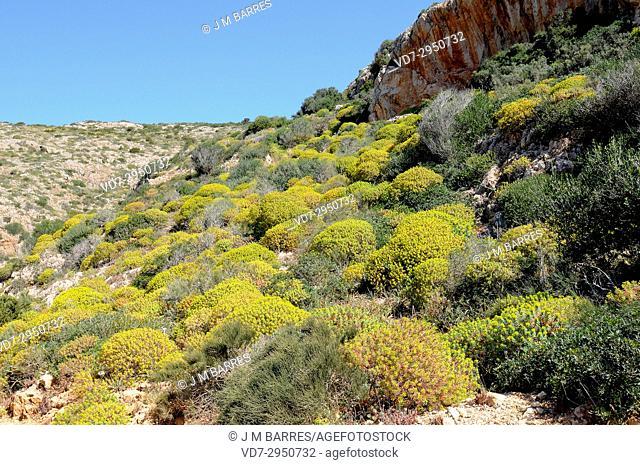 Cabrera Archipelago National Park, maquis shrubland. Majorca, Balearic Islands, Spain