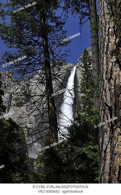 Yosemite Falls, through the trees