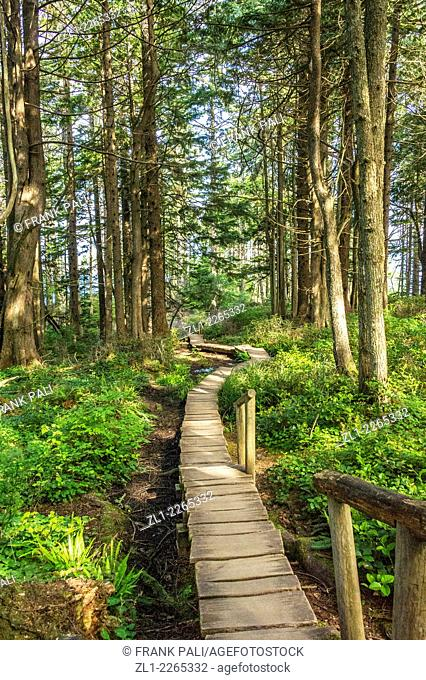 Hiking trails at Cape Flattery Lighthouse, Tatoosh Island, Olympic National Park, Washington, USA
