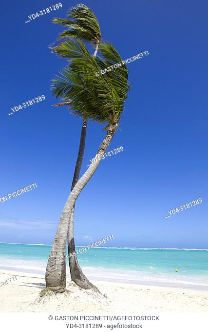 White sand beach, palm trees and crystal clear water, Bávaro beach, Verón Punta Cana, Higüey municipality, La Altagracia province, Dominicanan Republic