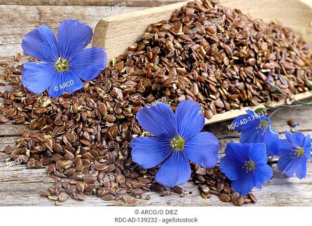 Blue Flax linseed Linum perenne Perennial Flax
