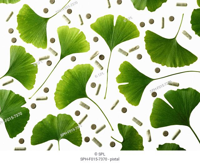 Leaves from the Maidenhair (Ginkgo biloba) tree and ginkgo supplements, studio shot