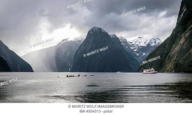Tourist boat, rainy mood, Milford Sound, Fiordland National Park, Te Anau, Southland Region, Southland, New Zealand