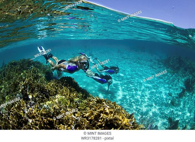 Over/under of three snorkelers underwater on a reef near New Providence, Bahamas