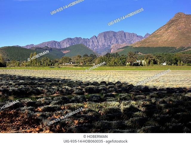 La Motte wine estate situated in Franschhoek, part of South Africa's Cape Wine Route