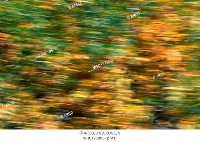 Autumn, foliage, Germany
