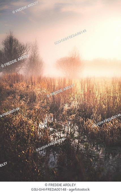 Marshy Field and Fog in Morning, Gloucestershire, England, UK