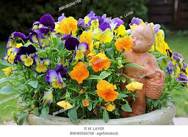 Pansy, Pansy Violet (Viola x wittrockiana, Viola wittrockiana, Viola hybrida), pansies with garden sculpture, Germany