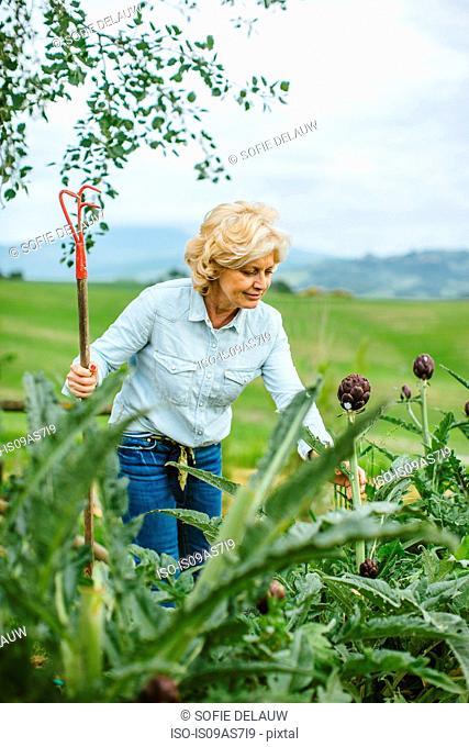 Mature woman tending garden, Tuscany, Italy