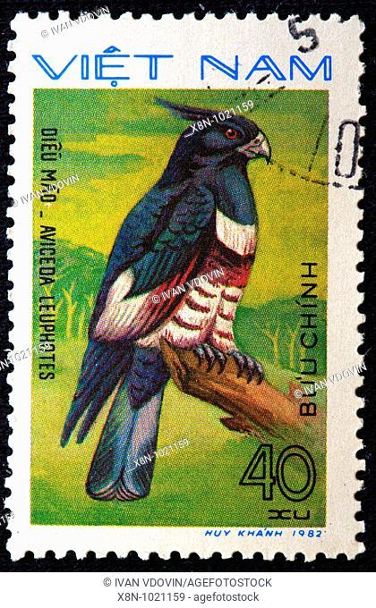 Black Baza Aviceda leuphotes, postage stamp, Vietnam, 1982