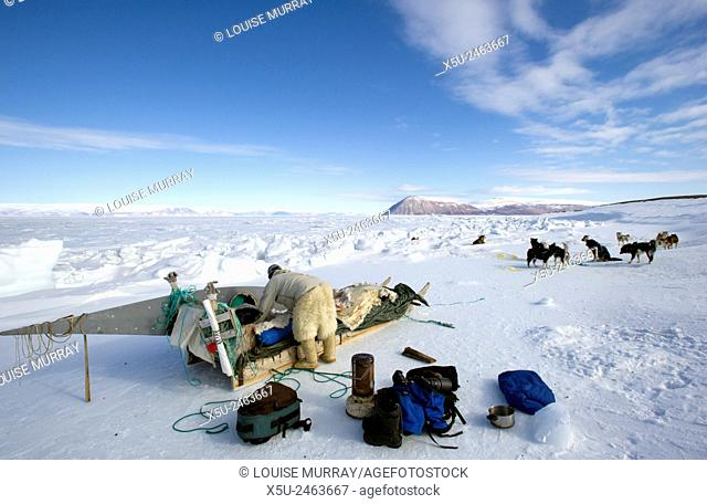 Hunter packing a dog sled for travel on sea ice. Kayak is strapped on for retrieval of seals shot in the water. His seal intestine whip on left is necessary to...