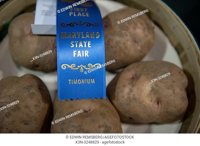 Blue ribbon from Maryland State Fair on top of potatoes, Timonium, Maryland