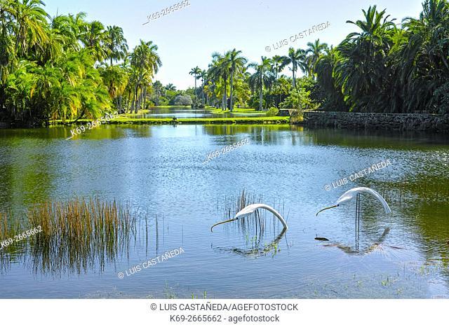 Fairchild Tropical Gardens. Florida. USA