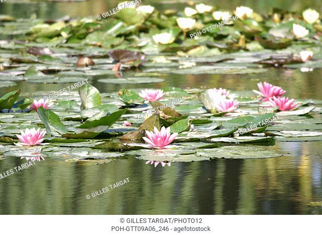 tourism, France, normandy, eure, giverny, claude monet house, impressionism painter, white water lily, garden, pond, flowers Photo Gilles Targat