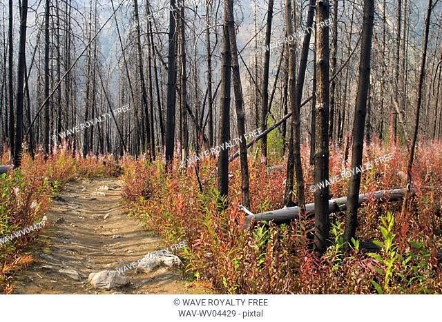 Stanley Glacier Trail - Kootenay National Park, BC, Canada
