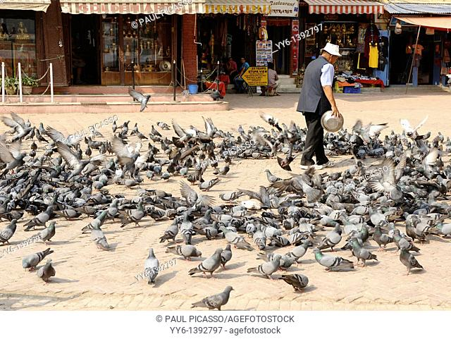 nepalese man feeding pigeons, boudhanath , one of the holiest Buddhist sites in Kathmandu , Nepal